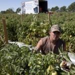 Ciudad de Texas opera sistema para ayudar a jornaleros a trabajar